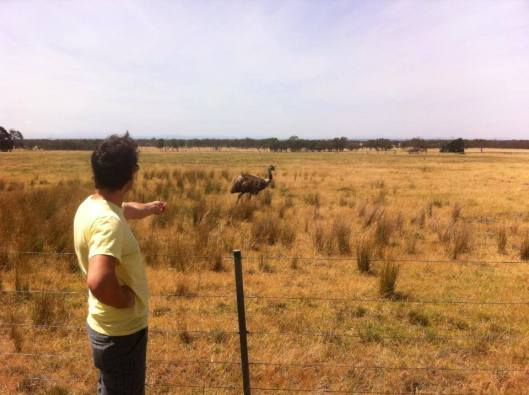 friend troy forlornly trying to feed an emu