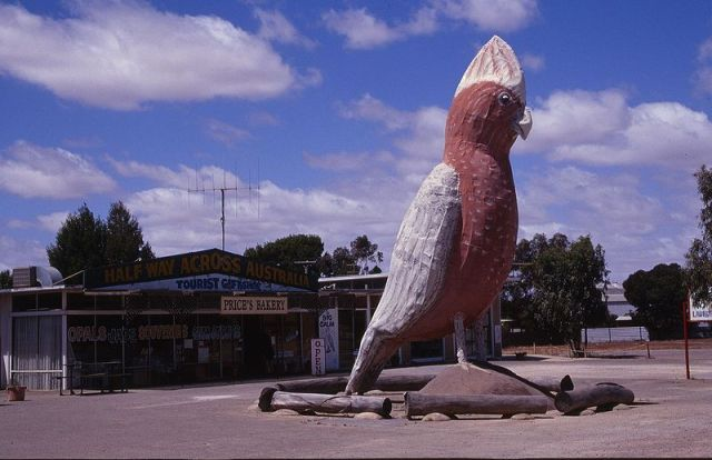 The Big Galah by Adam Eales