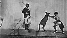 still from the boxing kangaroo, 1896