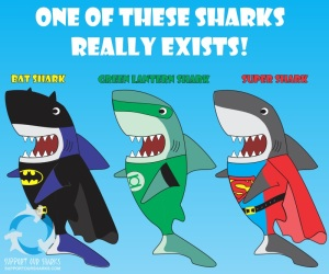 sharks from support our sharks