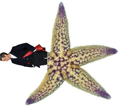 Actual depiction of a sea star with regenerated limb.