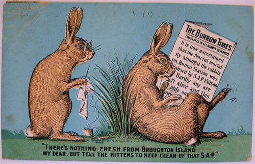 nobody likes rabbits