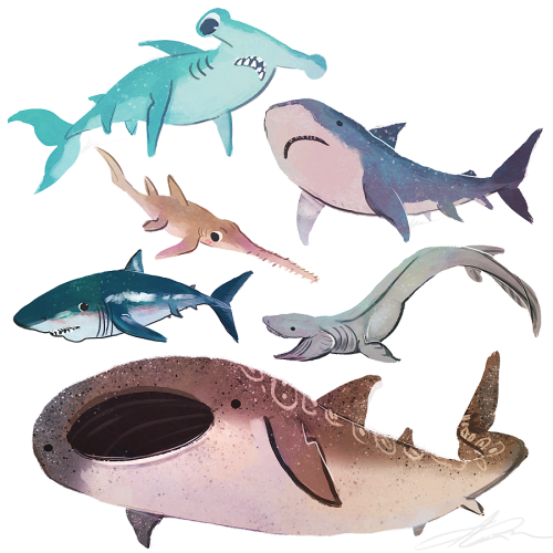 bloop bloop by zandraart - a series of sharks adorably illustrated and looking like they should be cuddled