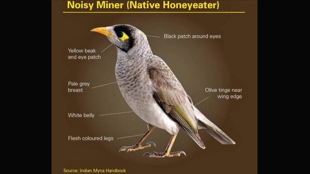 nativeminer