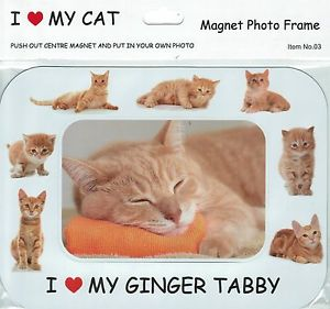 "A picture frame with decorated with pictures of ginger kittens, a photo of a sleeping ginger cat in the centre, and the words ""I [heart] my ginger tabby"" in allcaps comic sans."