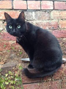 a black cat with big green eyes sits on a red brick wall, staring at the camera