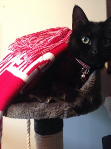 A black cat lying down covered by a Sydney Swans scarf